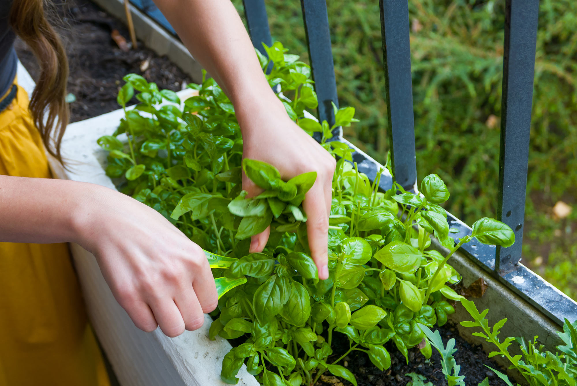 Kasva yhdessä Anjan kanssa: Äänestä kesäisistä resepteistä suosikkisi ja voita minikasvihuone!